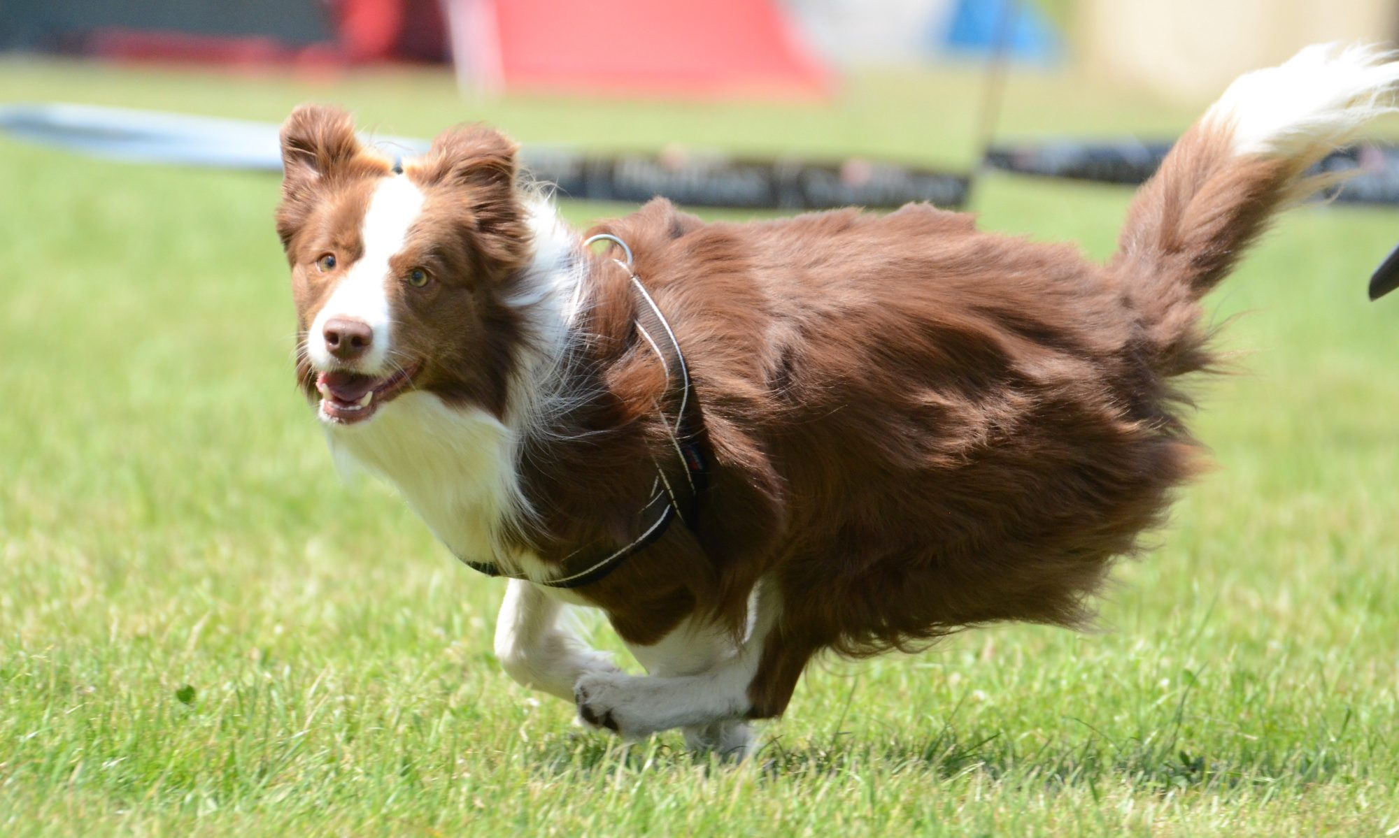 R.U.P.  FLYBALL